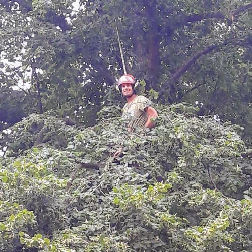 Thijs klimmend in een boom