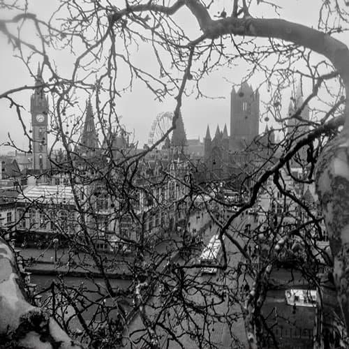 Zicht op de torens van Gent vanuit een boom